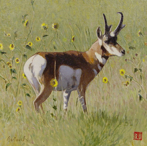 Image - Antelope in Sunflowers